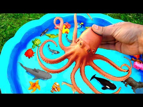 Learn Colors With Wild Animals in Blue Water Tub Shark Toys For Kids