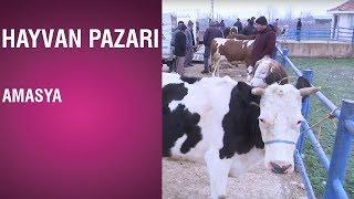 Hayvan Pazarı - Amasya / 10.01.2019