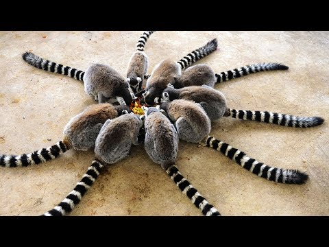 😻 10 Most Awesome And Unusual Pets Ever 🐌