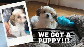 We Got A Puppy / Bringing Home A 7 Weeks Old Puppy / Puppy's First Car Ride / Puppy Essentials