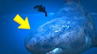 GTA 5 - OMG a Megalodon Shark!!