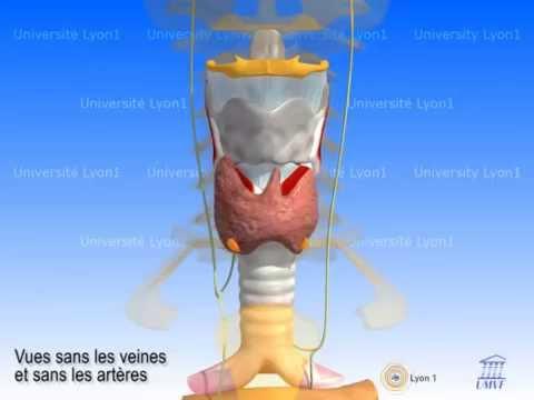 La douleur dans le domaine du plus large muscle du dos