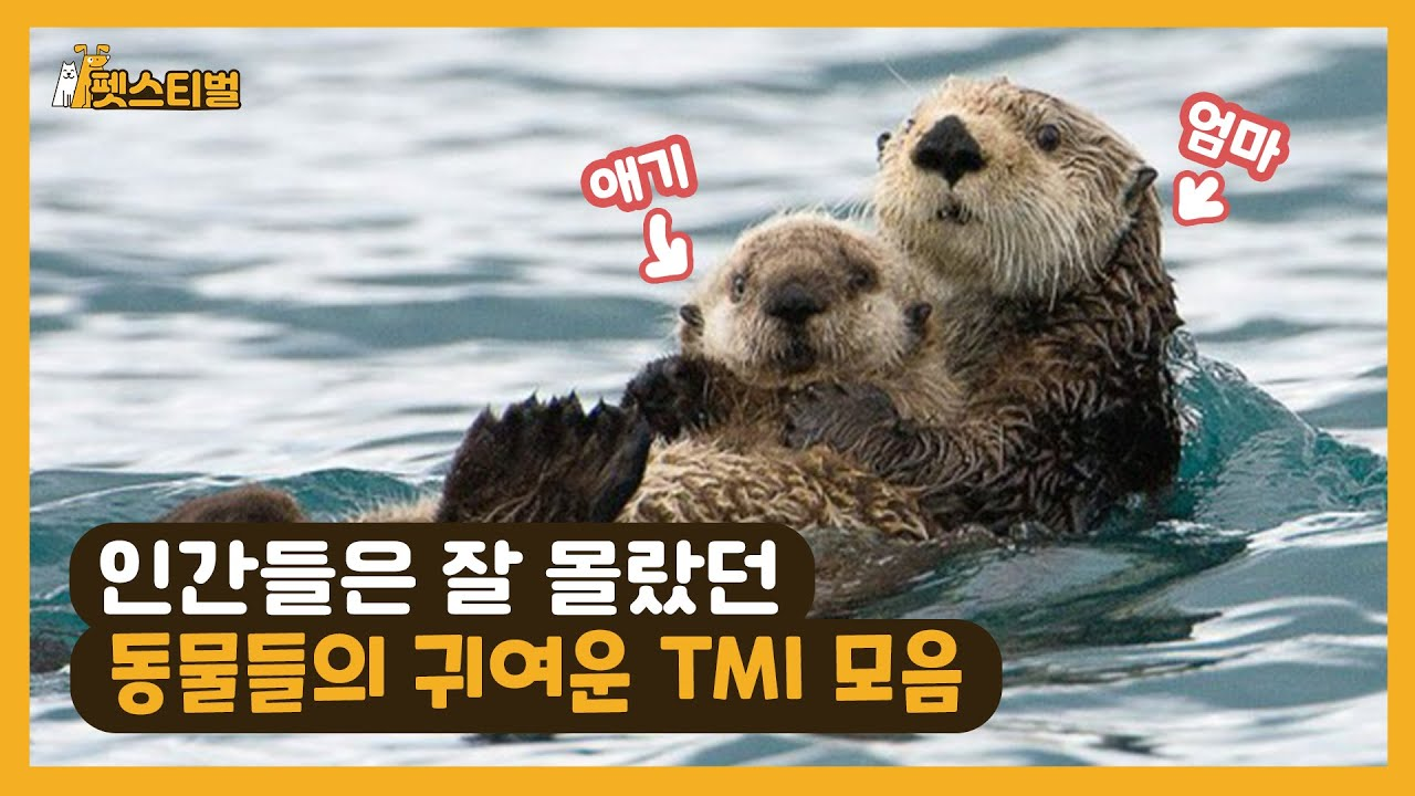 인간들은 잘 몰랐던 동물들의 귀여운 TMI 모음 20가지