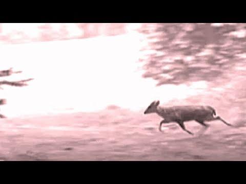 Fieldsports Britain – Deerstalking special: muntjac and that Exmoor Emperor