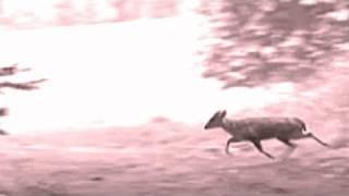 Fieldsports Britain – Deerstalking special: muntjac and that Exmoor Emperor, episode 53