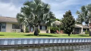 Magnolia's and Bismarck Palms