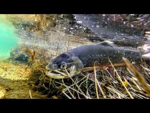 Fishings di ledobur di una fotografia