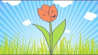 Cómo dibujar un tulipan