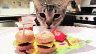 CAN I HAS CHEEZBURGER
