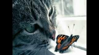 Кошки и бабочки