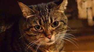 How to Bring Your Cat to the Vet Without a Carrier - Taking Care of Cats