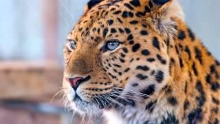 Топ 5 Фото Леопардов
