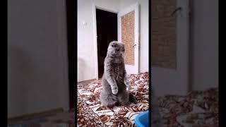 Нюша-зайчик (приколы о животных).