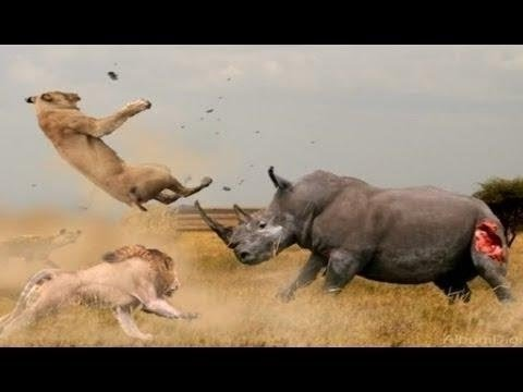 National Geographic Wild Thailand - Nat Geo Wild HD (Nature Documentary)