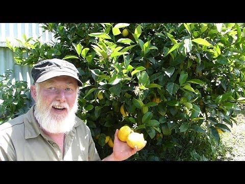 The Secret to Making SWEET Lemonade - SUGAR FREE & Fresh!