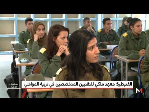 العرب اليوم - شاهد:المعهد الملكي للتقنيين في تربية المواشي واحدًا من أهم المعاهد في القنيطرة