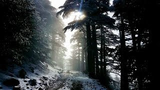 preview picture of video 'A Day In Mount chelia Algeria|يوم في جبل شيليا الجزائر|'