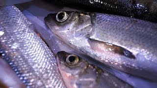 Шатер рыболов олта инголь