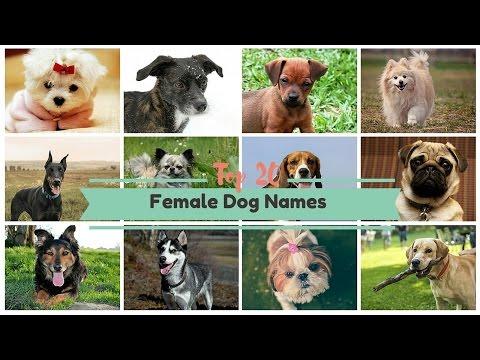 Download Top 20 Popular Female Dog Names In Full HD Mp4 3GP Video