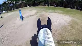 2108   Sharon van Daal  L-Paarden