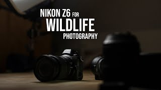 Nikon Z6 for Wildlife Photography - Firmware 3.0 and tips for faster autofocus.