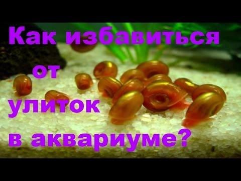 Какие бывают паразиты у человека видео