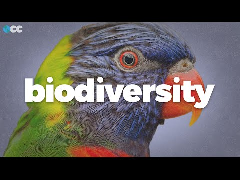 Biodiversity is collapsing worldwide. Here's why.