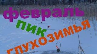 В какой месяц зимы лучше ловить щуку на жерлицу