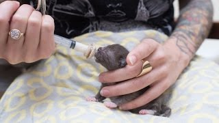 How to Syringe Feed a Newborn Kitten