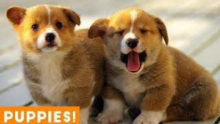 Cutest Puppy Compilation 2018 | Funny Pet Videos