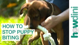 How To Stop Puppy Biting: Training Puppies Not to ...