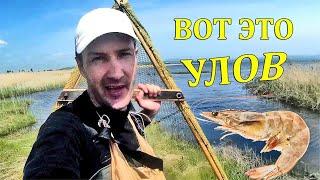 Когда можно ловить креветок в черном море