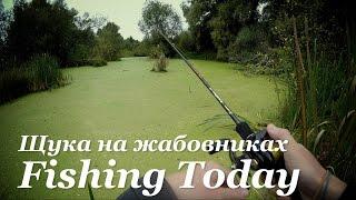 Для ловля хищника в заросших прудах