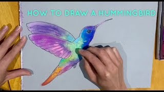 Beginners' - How To Draw A Hummingbird