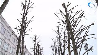 Проблема ухода за деревьями может быть рассмотрена на ближайшем заседании городской Думы