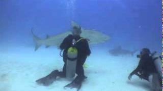 Bull Shark - Mating Ritual
