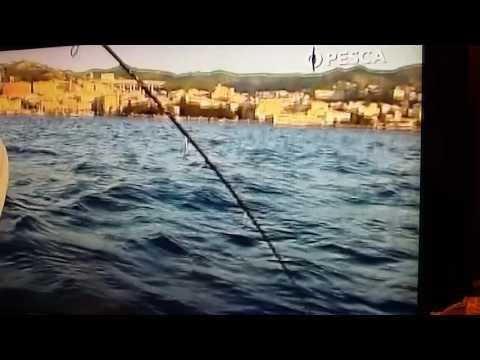Competizioni di club in un gioco su pesca