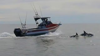 preview picture of video 'Profile Fish Episode 1 from Profile Boats'