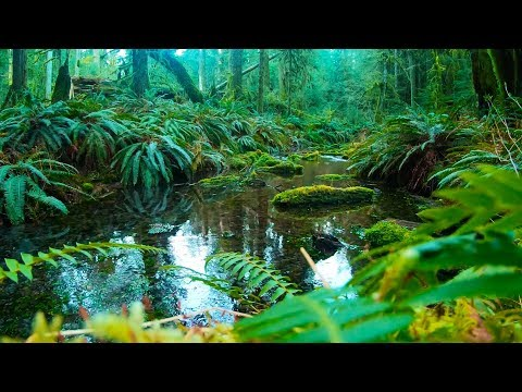 Creek Sounds for Sleeping, Studying or Relaxing   Rainforest Water White Noise   10 Hours