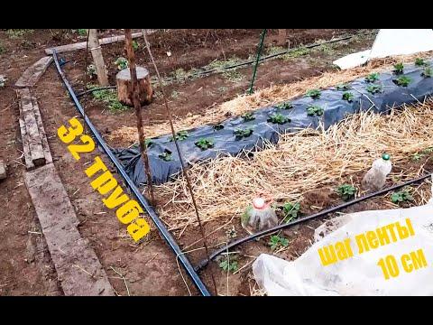 КАПЕЛЬНЫЙ полив огорода из под крана / ЦЕНЫ / моя ТЕПЛИЦЦА продолжение