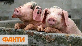 В бюджете планируют уменьшить расходы на животноводство - что ждет фермеров