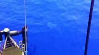 cá mập ngoài giàn khoan