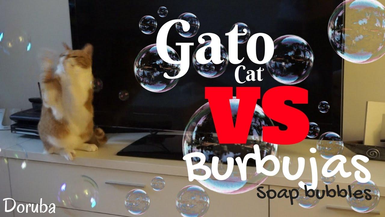 Gato VS Burbujas de jabón -- Cat VS Soap bubbles -- Misu al ataque -- Doruba
