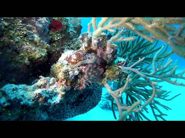 Best Diving in the World.  Cozumel , Mexico GoPro Hero3.