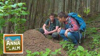 Spuren im Wald | Reportage für Kinder | Anna auf der Alm | #4