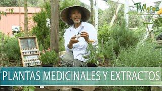 Plantas medicinales y extractos - TvAgro por Juan Gonzalo Angel Restrepo