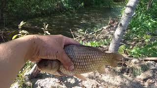 Рыбалка на карася я в шоке