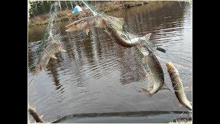 Рыбалка в селиярово ханты-мансийский район
