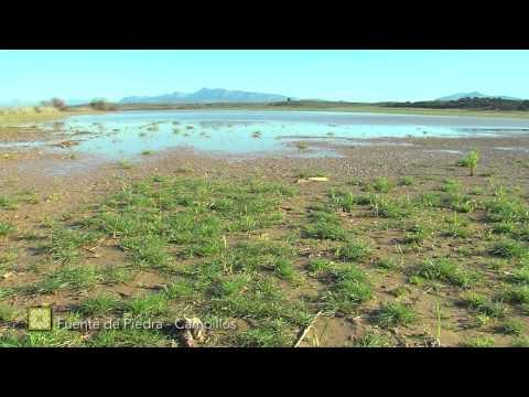 Der Große Wanderweg Málagas. Etappe 18: Fuente de Piedra – Campillos (Deutsch)