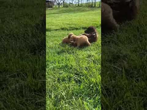 Brotherly Love playing on a nice Spring day